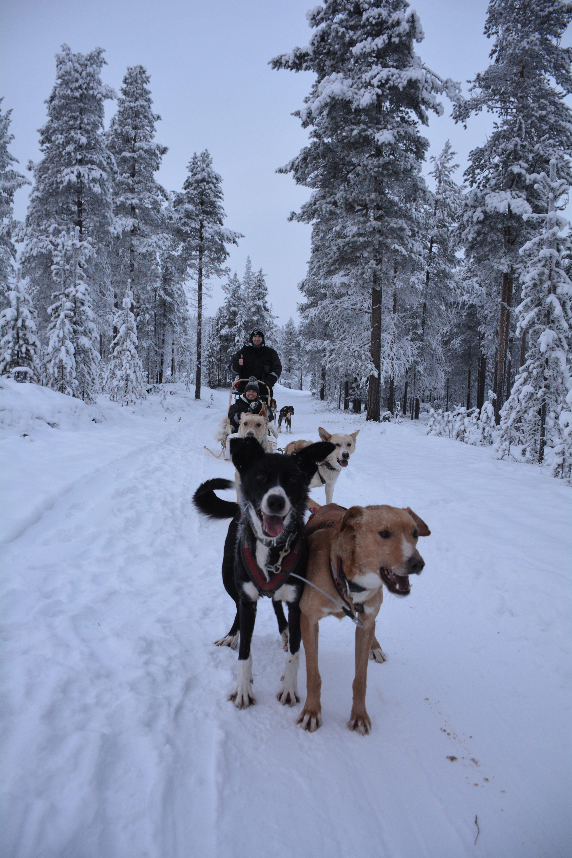 Dogsledding with Extreme Huskies