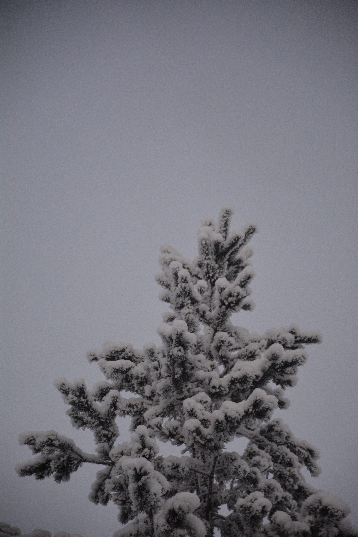 Finnish Lapland Trees